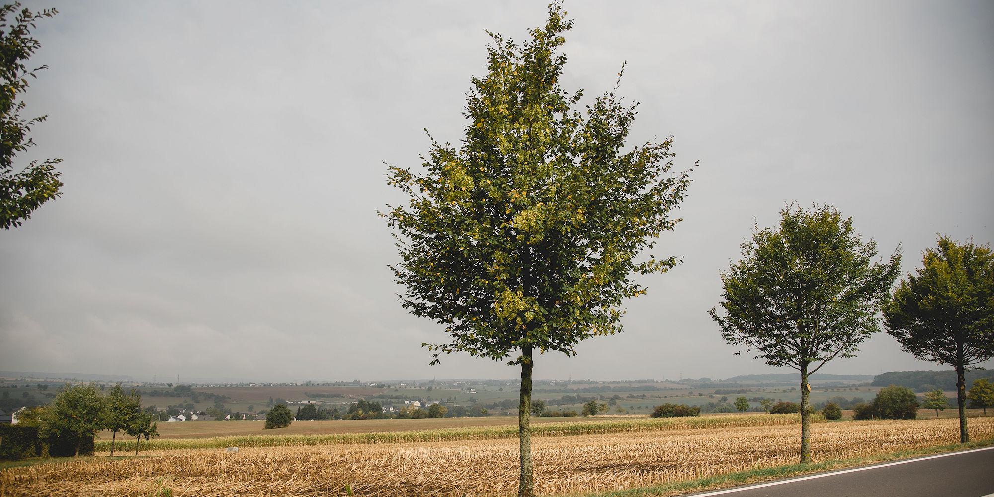 Ihr Raumgestalter im Raum Trier, Bitburg, Wittlich